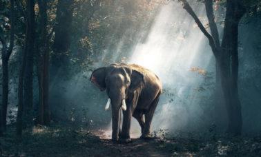 Słoń afrykański - gatunek zagrożony wyginięciem