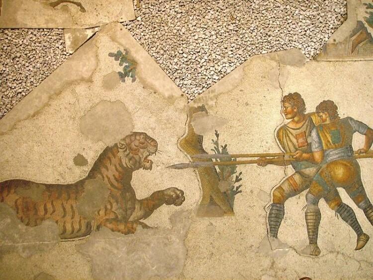 Walka z tygrysem